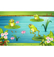 Three frogs living in the pond vector image vector image