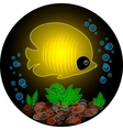 Transparent yellow fish vector image vector image