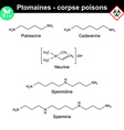 Ptomaines chemical formulas vector image vector image