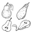 set hand drawn pears on white background vector image