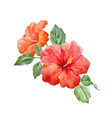 watercolor tropical hibiscus flower vector image vector image