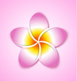 colorful plumeria flower placed on pink background vector image vector image