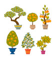 money tree set decorative plants in flower pots vector image