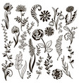plants doodle herbs flowers vector image vector image