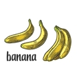 Two single and bunches of fresh banana vector image