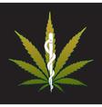 cannabis marijuana on medical prescription - vector image vector image