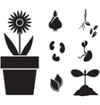 flower and seed vector image