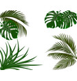 green leaves of tropical palm trees monstera vector image vector image