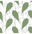 leaves on the background of marble vector image