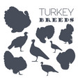 poultry farming turkey breeds icon set flat design vector image vector image