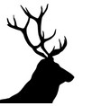 black silhouette a deer head and antlers vector image