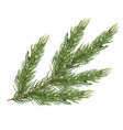 fir branch isolated on white background christmas vector image vector image