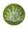 sticker tropical plant with leaves in the botanic vector image vector image