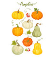 cartoon autumn pumpkins vector image vector image