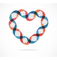 DNA genetic icon - heart vector image vector image