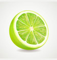 fresh lime fruit realistic 3d vector image vector image