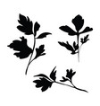 set silhouettes parsley collection vector image vector image