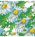 seamless pattern with chamomile flowers vector image