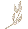 branch with leaves twig foliage sketch outline vector image