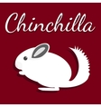 Chinchilla Pet icon in flat vector image