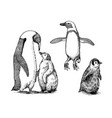 emperor penguin and cute baby small cute family vector image vector image
