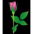 pink rose vector image vector image