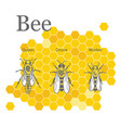 scientific image of bees on the honeycombs vector image