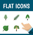 flat icon natural set of jungle wood spruce vector image vector image