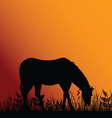 horse eat in nature vector image vector image