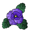 pansy flower colorful vector image