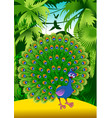 peacock in the jungle vector image