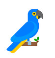parrot bird blue breed species animal nature vector image