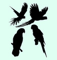 parrots animal silhouette vector image