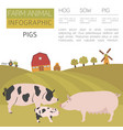 pig farming infographic template hog sow pig vector image vector image