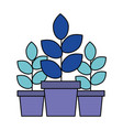 three potted plants on white background vector image vector image