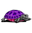 turtle iconcartoon icon isolated on vector image vector image