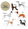 Image set of dogs Greyhound Russian hound Husky vector image