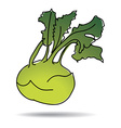 freehand drawing kohlrabi icon vector image vector image