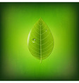 Grunge Green Background With Green Leaf vector image vector image