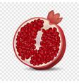 half pomegranate icon realistic style vector image vector image