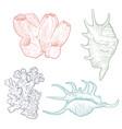 hand drawn seashells vector image vector image