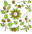 design elements of oak leaves and acorns vector image