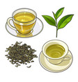 green tea cup fresh and dry leaves vector image