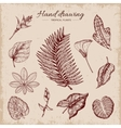 Hand Drawn Tropical Plants vector image vector image