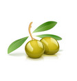 two green olive with leaf vector image