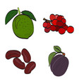 vegetables and fruits vector image vector image