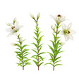 white lilies set of realistic flowers vector image vector image