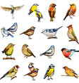 collection of birds watercolor painting vector image