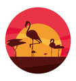 flamingos birds in the sunset vector image