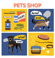 flat pet shop square concept vector image